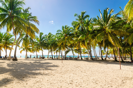 Exotic Caribbean beach full of beautiful palm trees, Dominican Republic