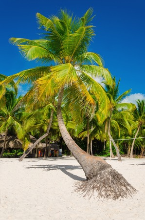 Exotic high palm trees on a wild beach against the azure waters of the Caribbean Sea, Dominican Republic