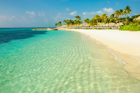 A beautiful sandy exotic beach with  with high coconut palms