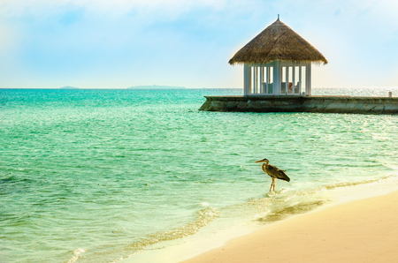 An exotic view of the part of the restaurant erected on a promontory towards the sea with a heron in the foreground, Maldives Stock Photo