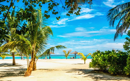 Exotic sandy beach with palm trees
