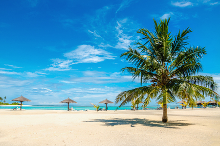 Exotic sandy beach with palm tree Stock Photo