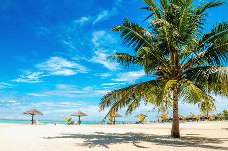 Palm tree on the sandy beach with palm tree umbrella