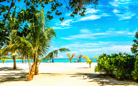 Exotic sandy beach full of tall palm trees Stock Photo
