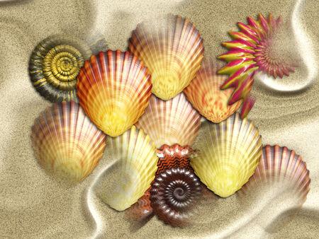 Various sea shells on sand