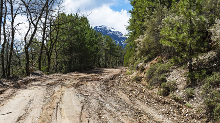 Road mud in the forest photo