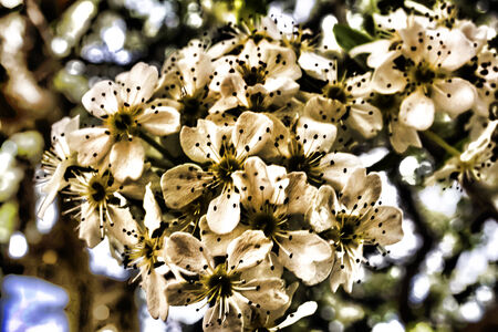 almond bud: Artistic style for almond flowers