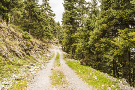 Trail passing through green forest photo