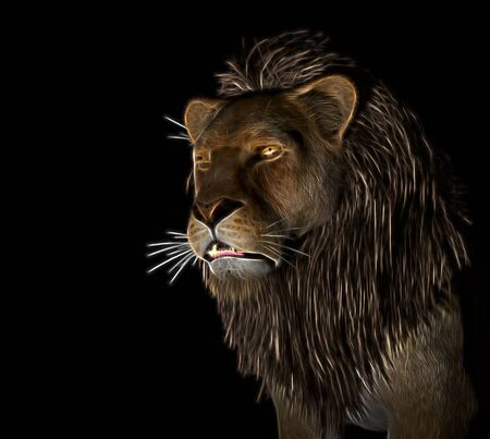greatness: Angry Lion Illustration at black background