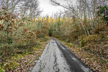 piny: Forest road running through trees