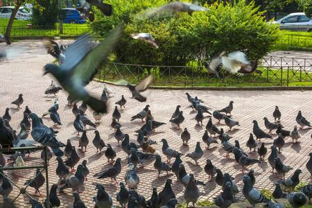A flock of pigeons in a park of the Athens city 版權商用圖片