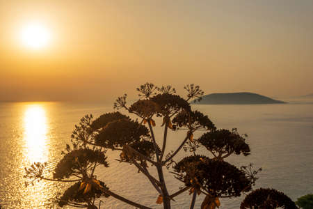 Plant silhouette with scenic sunset at sea. Greece. 免版税图像