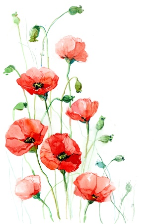 oriental season: poppies (series C) Stock Photo