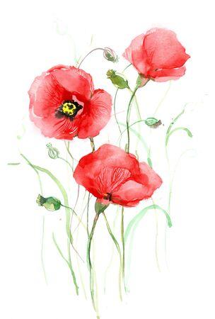 poppy flower: poppies (series C) Stock Photo