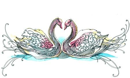 swimming bird: swan couple (series C) Stock Photo
