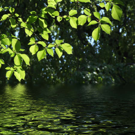 reflecting: green leaves reflecting in the water, shallow focus