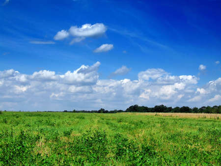 fresh green grass with bright blue sky Stock Photo - 2828438