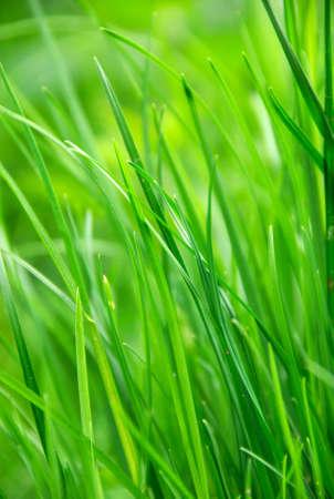 green grass in summer sun