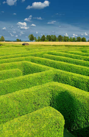 hedge plant: labyrinth done from the hedgerow