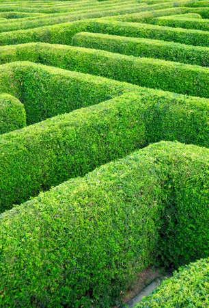 puzzelen: labyrint gedaan van de haagplanten Stockfoto