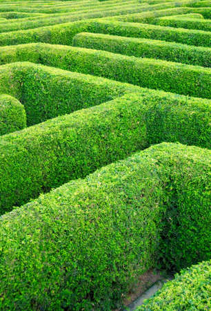 hedges: labyrinth done from the hedgerow