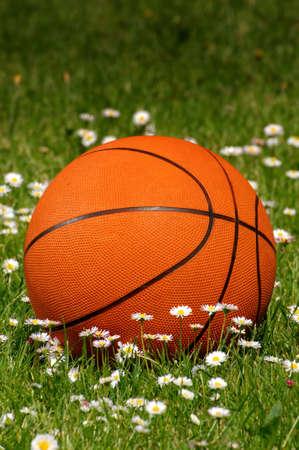 The orange ball to the basket-ball lies among daisies