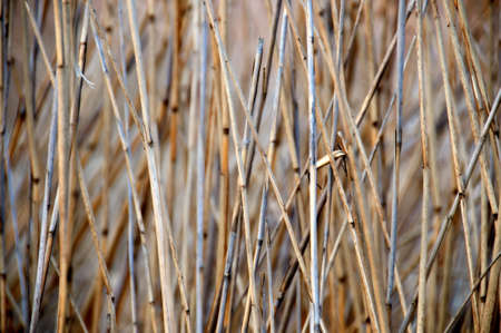 Dry grass closeup Stock Photo