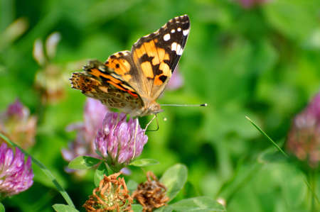 butterfly Stock Photo - 5477215
