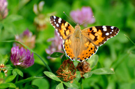 butterfly Stock Photo - 5477333