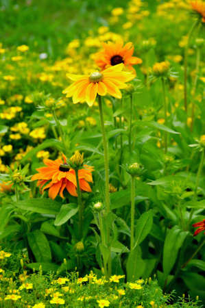 Orange and yellow flowers in the garden