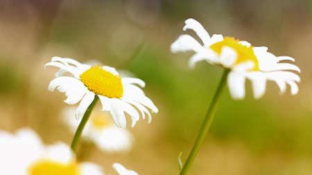 photgraphy: flowers