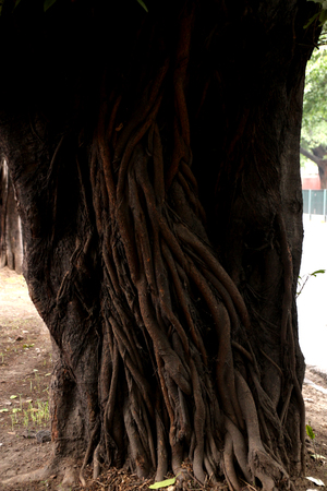 A big and old tree in a park Banco de Imagens