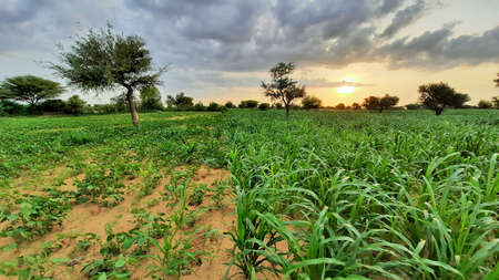cloudy sky in monsoon in fields of India Stockfoto
