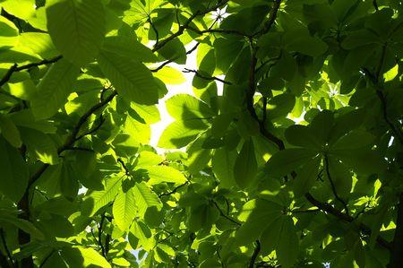 Magnolia leaves. Nature background. Stock Photo - 5122585