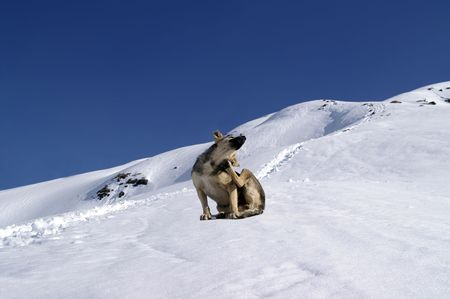 Dog in the snowy mountains photo