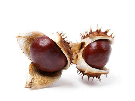 Two horse chestnuts close-up. Isolated on white background  photo
