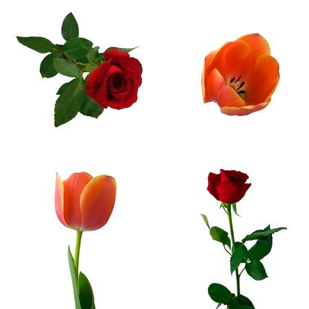 Set of roses and tulips. Isolated on white background. photo