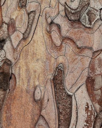 tree trunk: Wooden texture. Macro photo of Crimean pine tree.