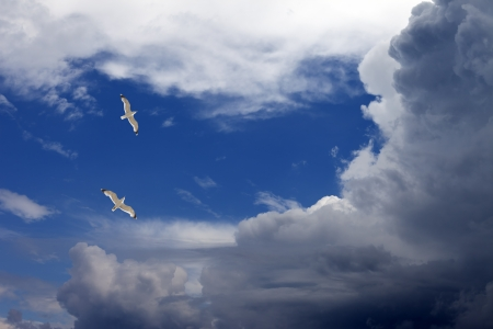 hover: Two seagulls hover in sky Stock Photo
