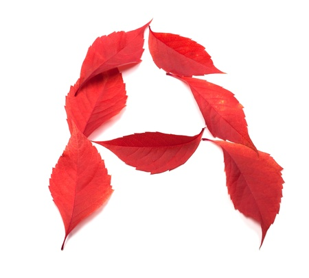 Letter A composed of red autumn virginia creeper leaves on white background photo