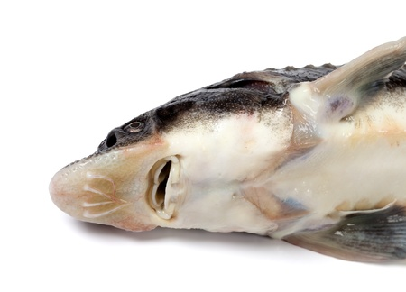 Head of dead sterlet fish on white background  Close-up view  photo