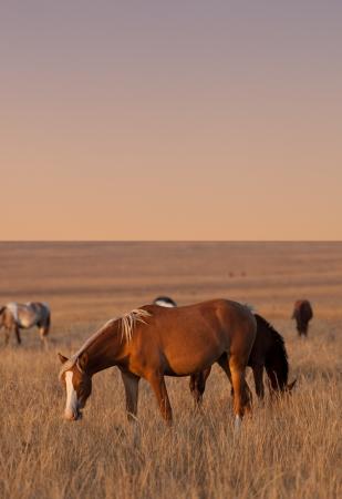 Horses grazing in evening pasture photo