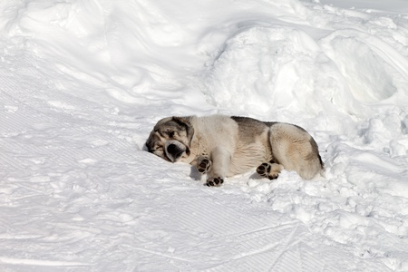 Dog sleeping on snow Stock Photo - 15928140