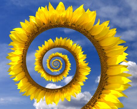 Sunflower spiral against blue sky with clouds photo