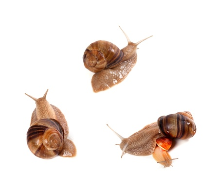 Family of snails on white background  Top view  Stock Photo - 19159319