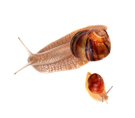 Family of snails isolated on white background  Top view  photo