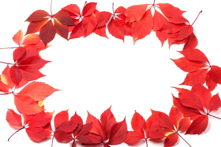 Autumn leaves frame isolated on white background. Virginia creeper leaves. photo