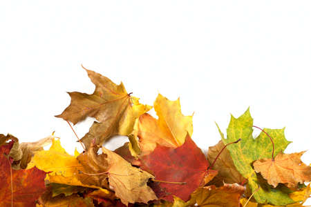 Autumn maple-leaf background with copy space photo