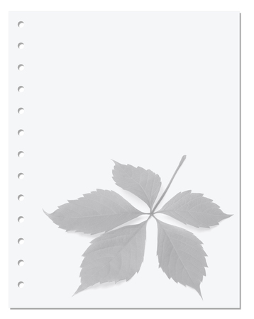 Notebook paper with virginia creeper leaf on background photo