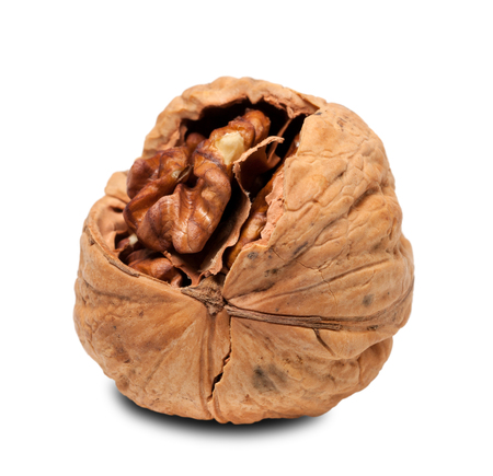 Walnut isolated on white background. Close-up view. photo